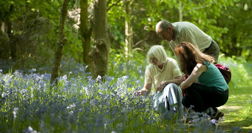 Mini bus Hire Picking Bluebells in Bloom speke hall National Trust Gardens